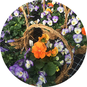 Easter and Early Spring plants
