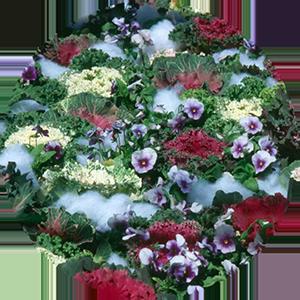 Fall plantings